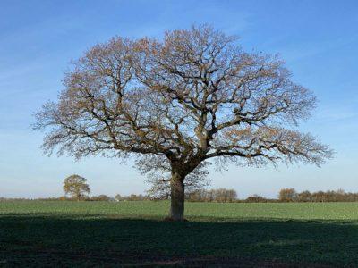 Baum im Herbst bei Bülk