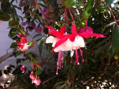 Blütenpracht im Botanischen Garten Kiel
