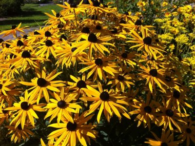Blumen im Botanischen Garten Kiel