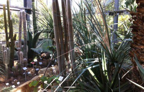 Botanischer Garten Kiel Kakteenschau