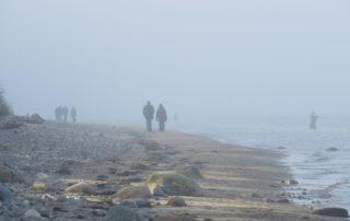 Nebel am Ostseestrand Dänisch-Nienhof
