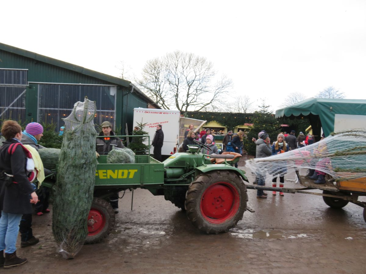 Weihnachtsmarkt Gut Augustenhof Tannenbaumverkauf