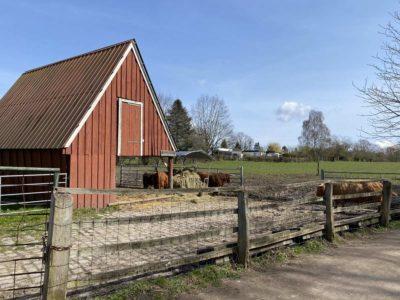 Futterstelle Hochlandrinder Tiergehege Suchsdorf