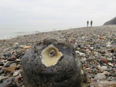 Hühnergott am Strand der Ostsee