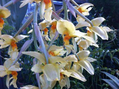 Orchideenschau Botanischer Garten Kiel