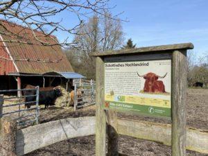 Schottische Hochlandrinder Tiergehege Suchsdorf