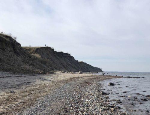 Seehund in der Ostsee an der Steilküste Stohl