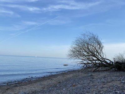 Strand Dänisch-Nienhof Dänischer Wohld