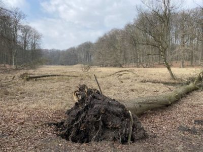 Tiergehege Tannenberg umgestürzter Baum