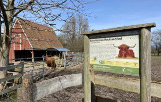 Tiergehege Suchsdorf Schottisches Hochlandrind