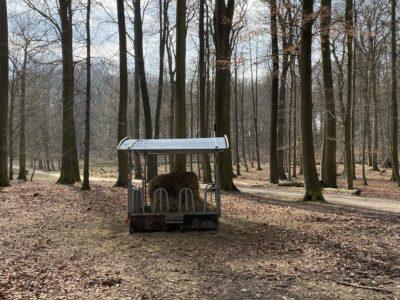 Futterstelle Tiergehege Tannenberg