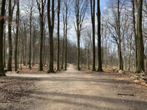 Waldspaziergang Tiergehege Tannenberg
