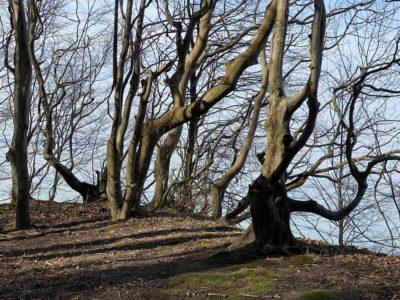 Wald Steilküste Dänisch-Nienhof