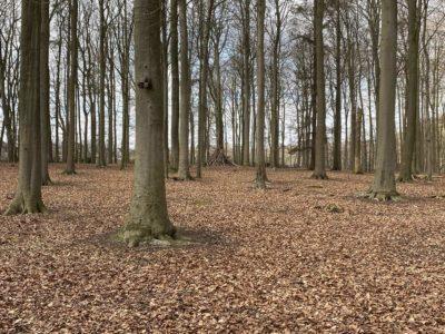 Wald Tiergehege Tannenberg